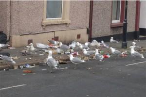 seagulls food