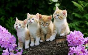and here's some lovely kittes to calm us all down again